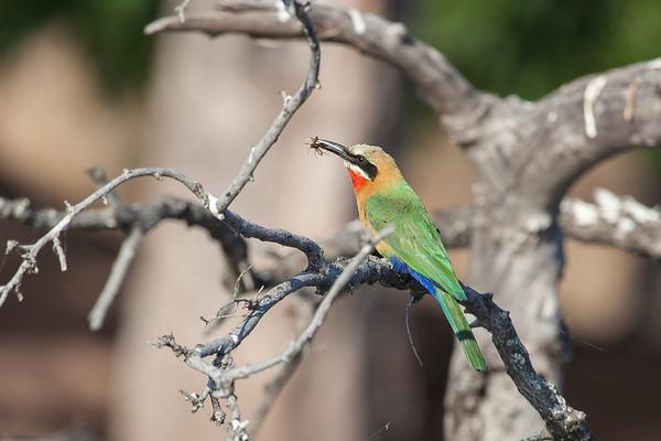 Zambia, Botswana Photo Safari